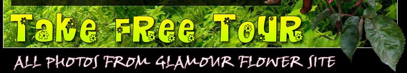 take free tour at glamour flower